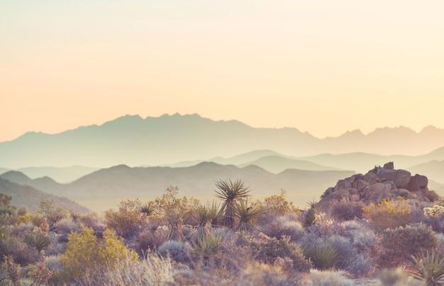 Arizona desert landscapes at sunrise, usa Premium Photo