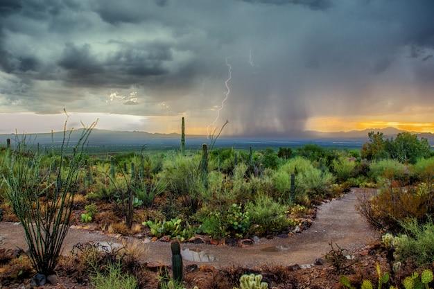 Arizona desert monsoon storm with dramatic skies at sunset Premium Photo
