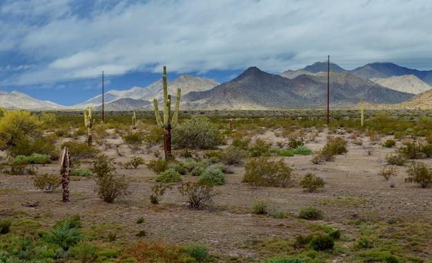Arizona desert panorama landscape in saguaro cactus Premium Photo