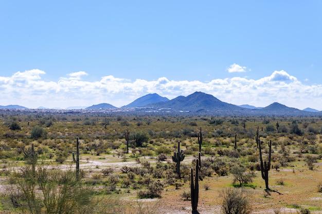 Arizona mountain range with saguaro cactus, sky and light clouds and other desert plants. Premium Photo