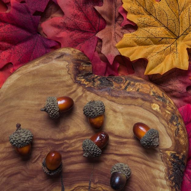 Arrangement of autumn acorns on wood stump Free Photo