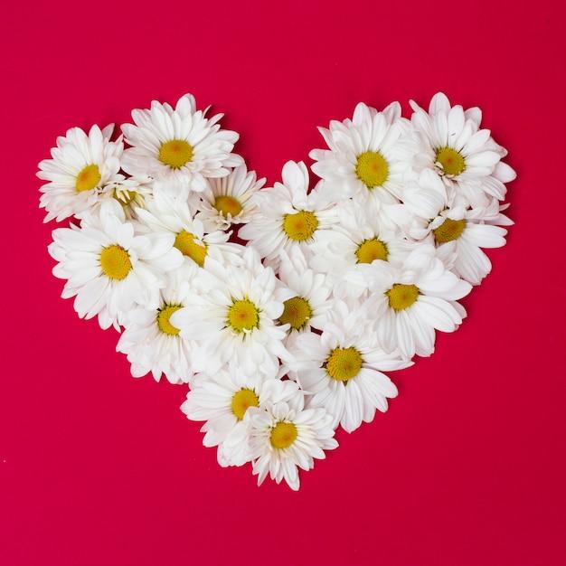 Arrangement of daisies in heart shape Free Photo