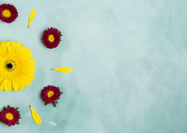 Arrangement of daisies and sunflower with copy space Free Photo