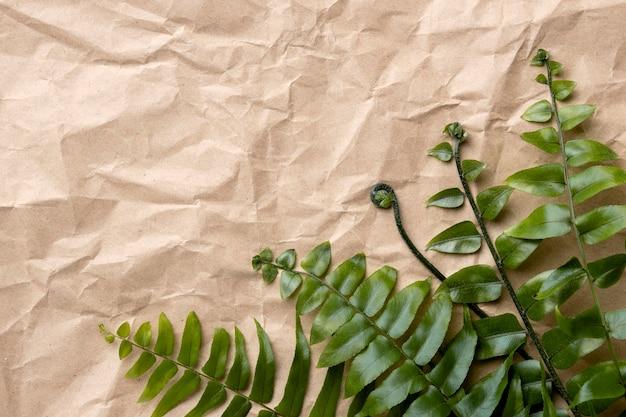 Disposizione delle foglie verdi con copia spazio Foto Gratuite