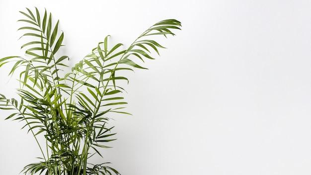 Disposizione della pianta verde con copia spazio Foto Gratuite