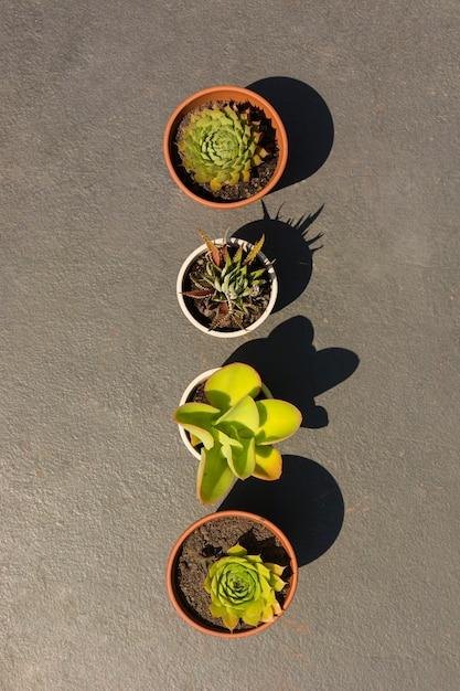 Композиция из разных растений в горшках Бесплатные Фотографии