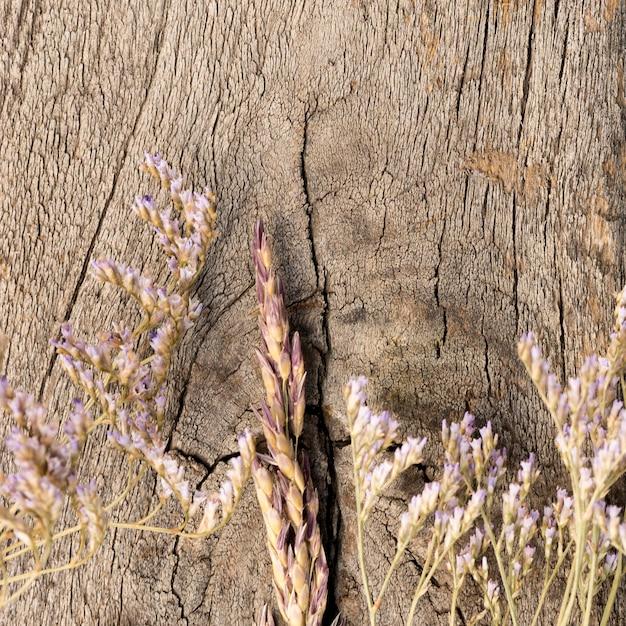 Расположение сухих растений на деревянном фоне Бесплатные Фотографии
