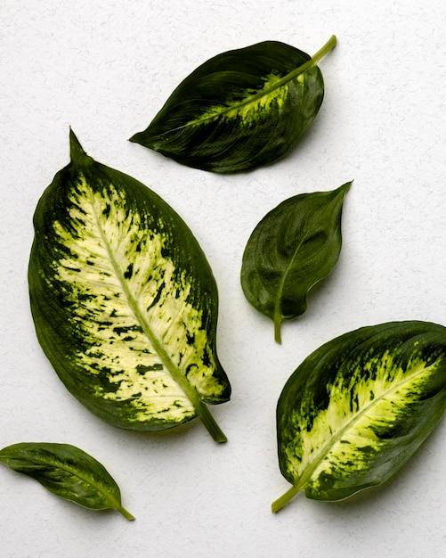 白地に緑の葉の配置 Premium写真