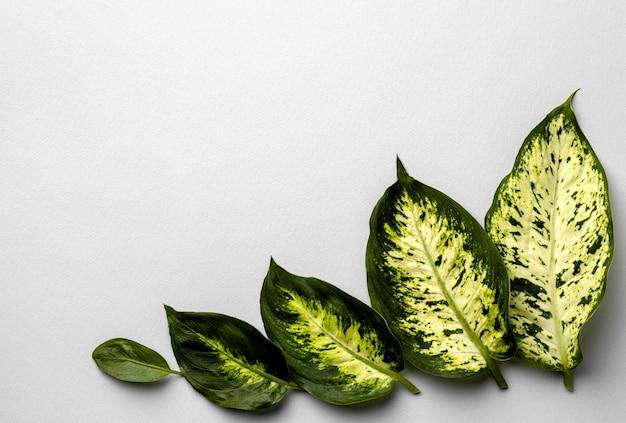 コピースペースのある緑の葉の配置 Premium写真