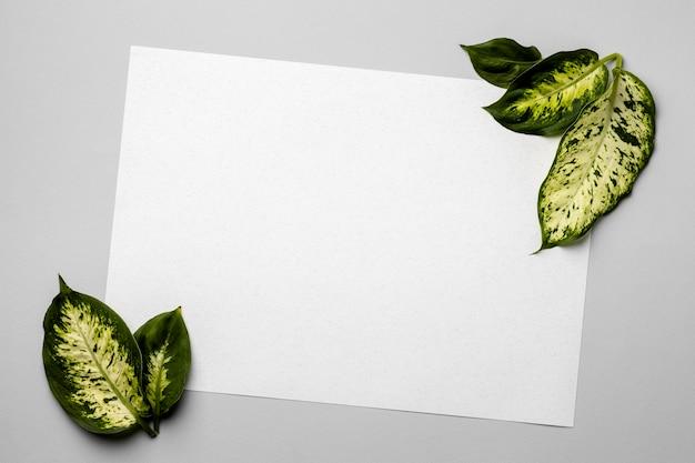 空のカードで緑の葉の配置 Premium写真