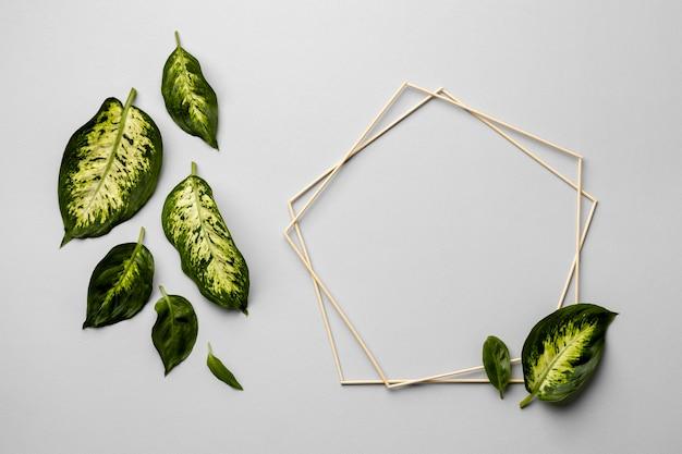 フレーム付きの緑の葉の配置 Premium写真