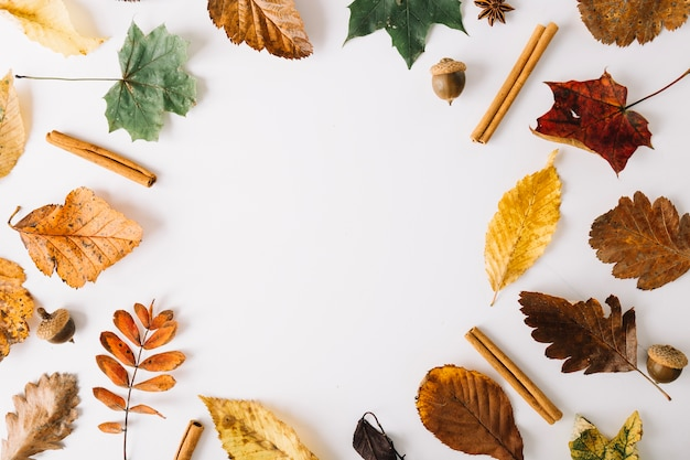 Arrangement of leaves and condiments Free Photo
