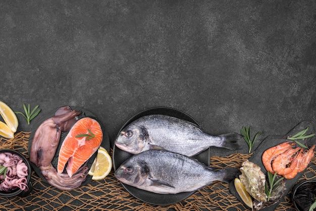 다양한 종류의 물고기 복사 공간 배치 무료 사진