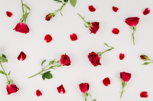 Arrangement of simple red roses Free Photo