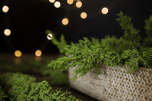 Arrangement with christmas tree twigs in a box Free Photo