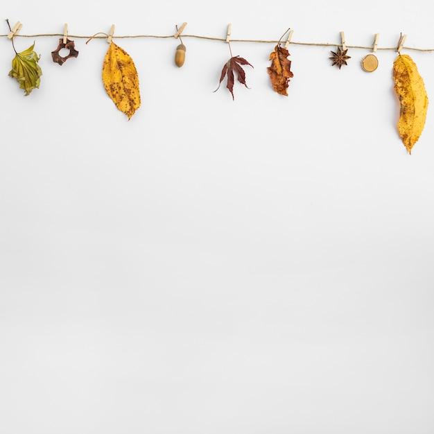 Arrangement with leaves and acorn hanging on clothesline Free Photo