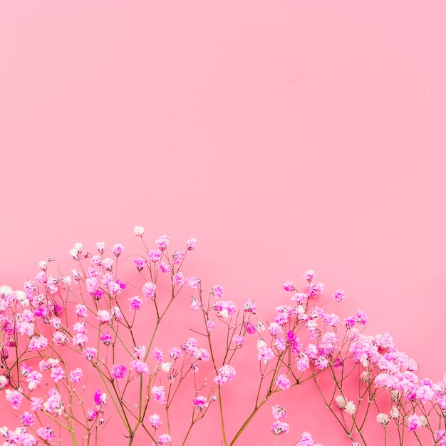 Arrangement with pink flowers on pink background Free Photo
