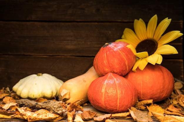 Arrangement with pumpkins and sunflower on wooden background Free Photo