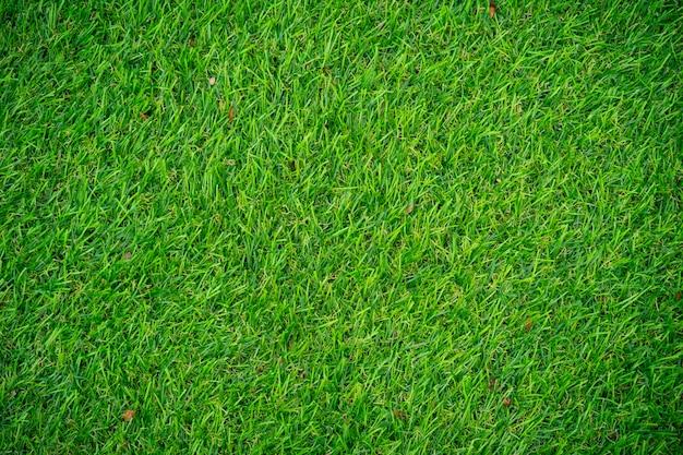 Artificial grass  texture. Premium Photo