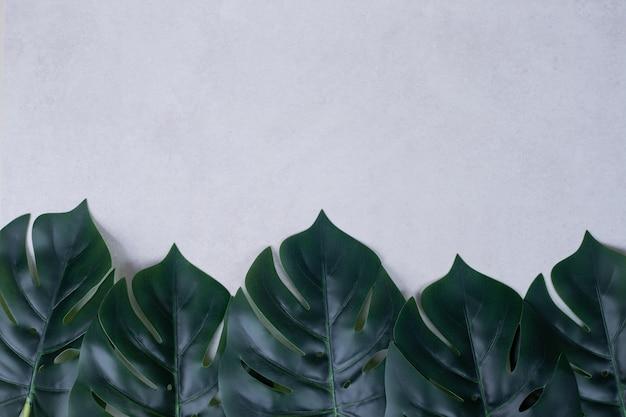 白地に人工緑の葉。 無料写真