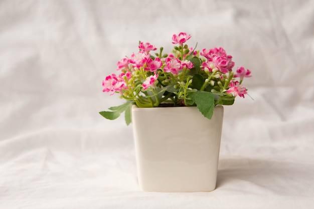 Artificial pink flowers in small pot photo premium download artificial pink flowers in small pot premium photo mightylinksfo