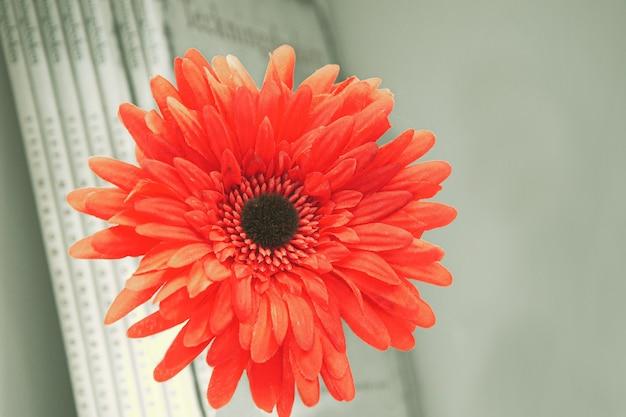 本と本棚の壁に人工の赤いガーベラの花 Premium写真