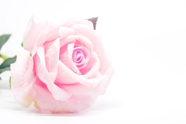 Artificial sweet pink rose for decoration on white Premium Photo