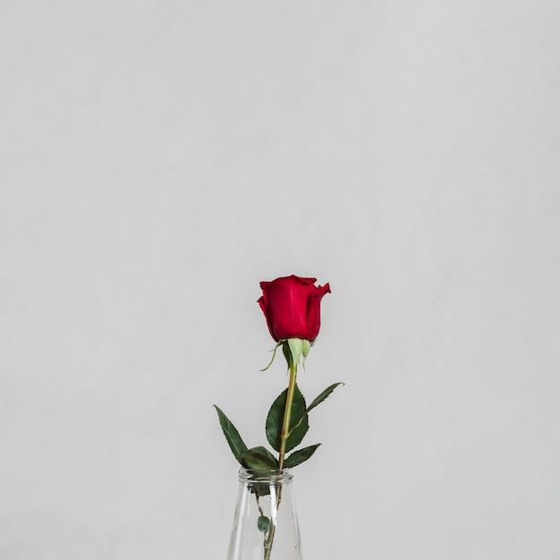 Художественное фото красивой розы Бесплатные Фотографии