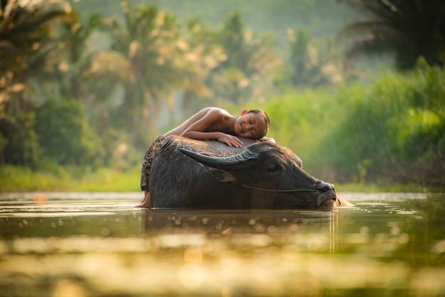 Asia child sleep on buffalo boy happy and smile give love animal buffalo water on river Premium Photo