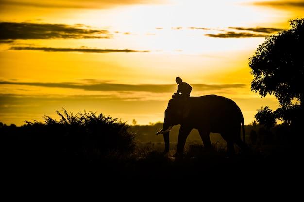 Asian elephant silhouette in thailand Premium Photo
