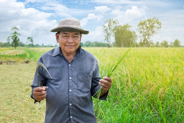 Asian farmer man wearing a hat blue striped shirt holding the golden paddy grains and smiling happily in the beautiful rice fields Premium Photo