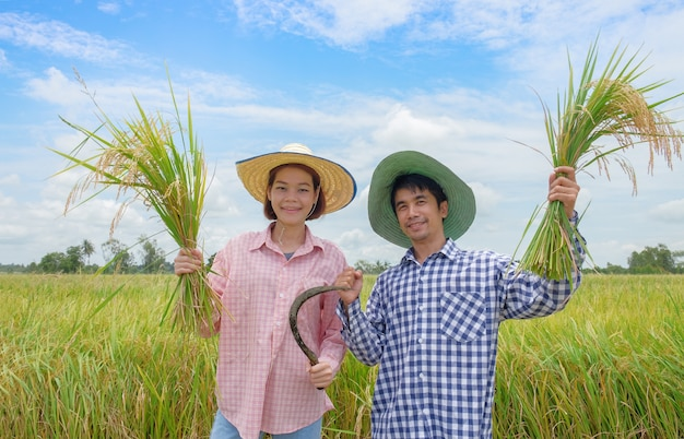 Asian farmer, man and woman wearing a hat pink and blue striped shirt holding the golden paddy grains and smiling happily in the beautiful rice fields Premium Photo