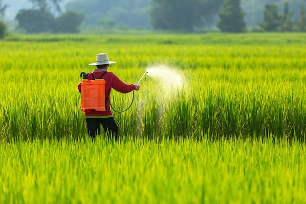 Asian farmer peasantry spraying pesticides in rice fields Premium Photo