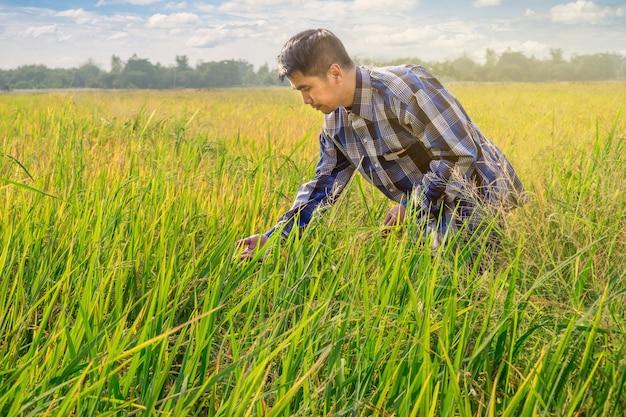 Asian male farmer work on rice field with nice sky Premium Photo
