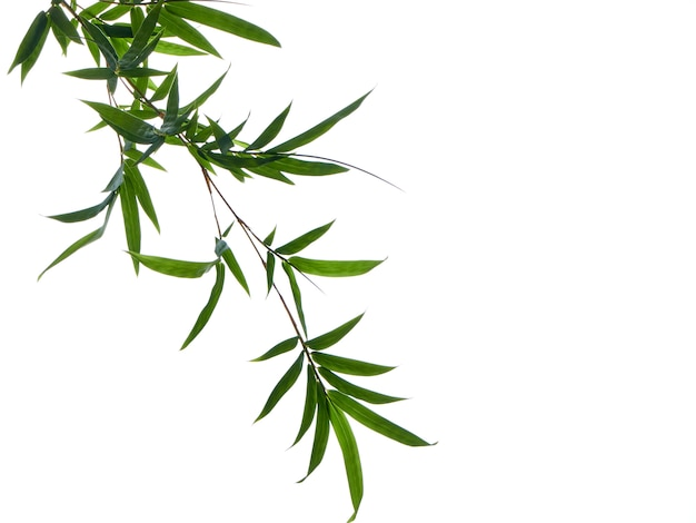 Asian natural background with bamboo Premium Photo