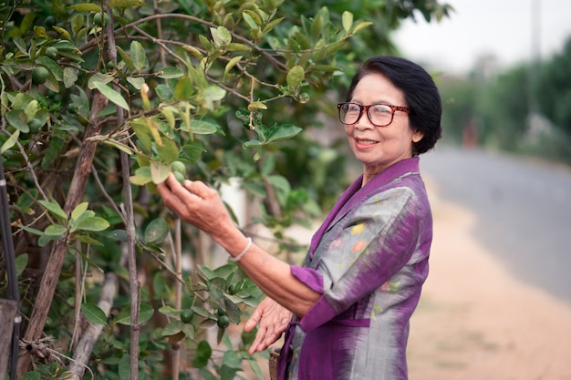 Asian old women looking lemon trees and holding bamboo basket in countryside. Premium Photo