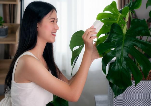 アジアの女性は彼女のマンションでモンステラの葉をきれいに、この画像は植物、趣味、家、decoreの概念に使用できます。 Premium写真