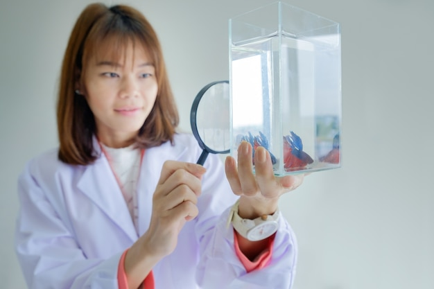 Asian woman scientist in doctor hold magnifying glass looking fighting fish glass tank on Premium Photo