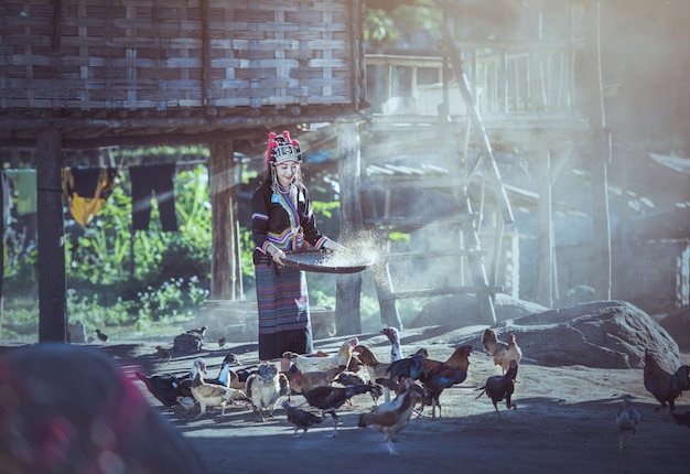 Asian women worker winnowing rice separate between rice and rice husk and feeding chickens Premium Photo
