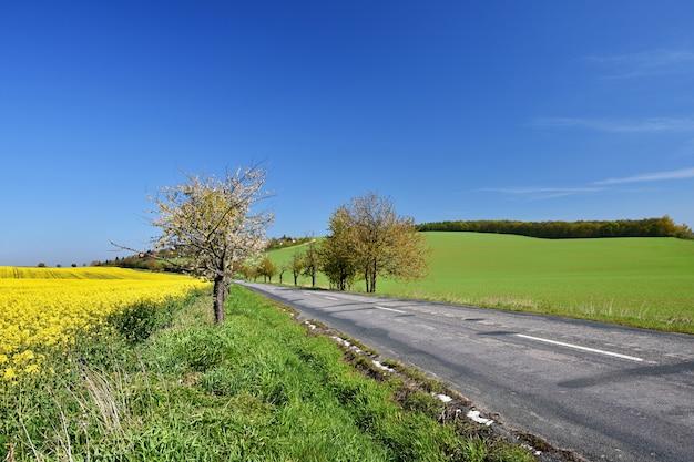 Asphalt road near a field with beautiful rapeseed flowers (brassica napus) (brassica napus) Free Photo