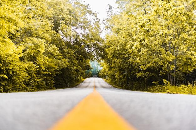 Асфальтовая дорога с желтой линией и лесной фон Premium Фотографии