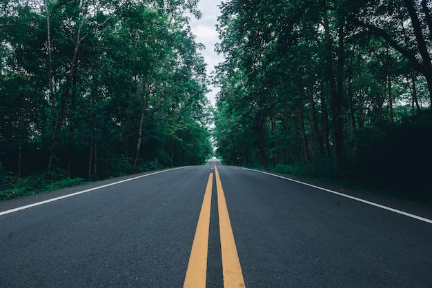 Asphalt road with yellow diving line and forest background Premium Photo