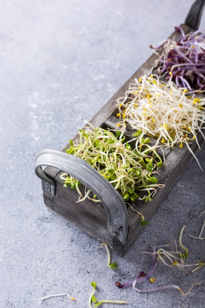 Assorted vegetable sprouts Premium Photo