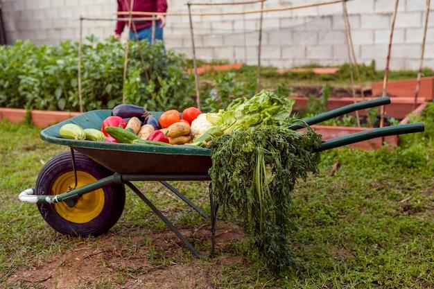 手押し車で野菜の品揃え 無料写真