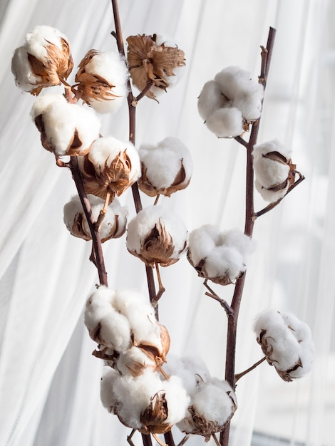 Assortment with cotton flowers and white curtain Free Photo