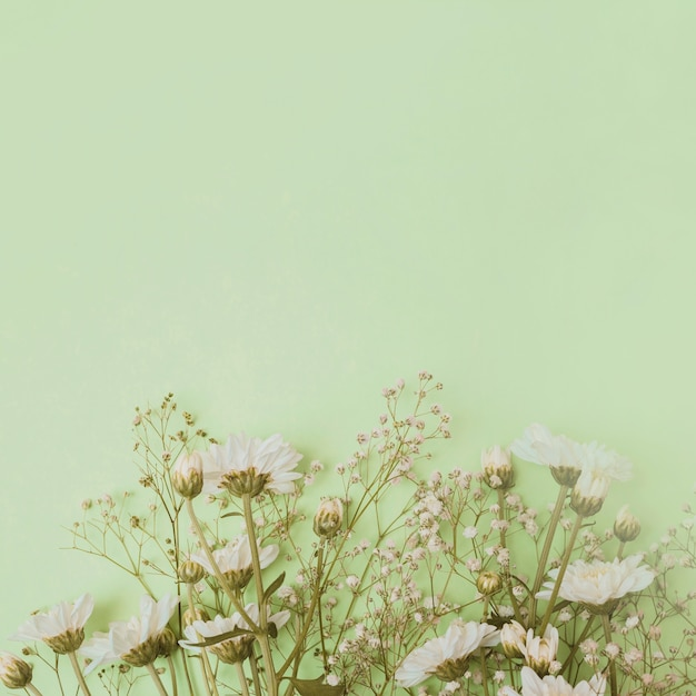 Aster and baby's-breath flowers at the bottom of green background Free Photo