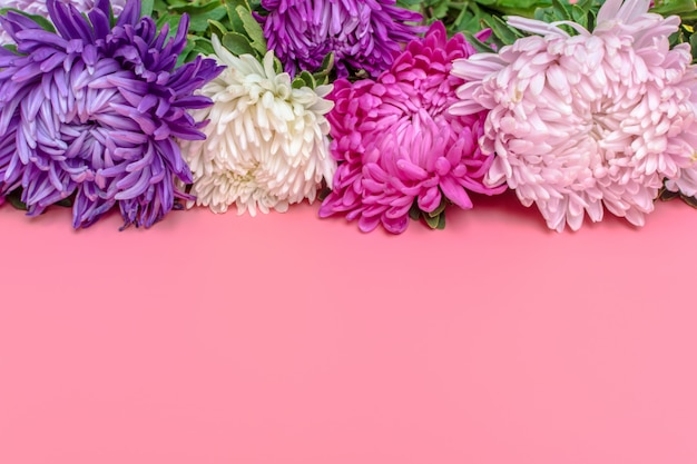 Aster flowers on pastel pink color background. flat lay. Premium Photo