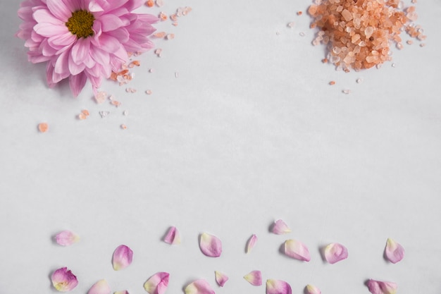 Aster pink flower and himalayan salt with petals on white background Free Photo