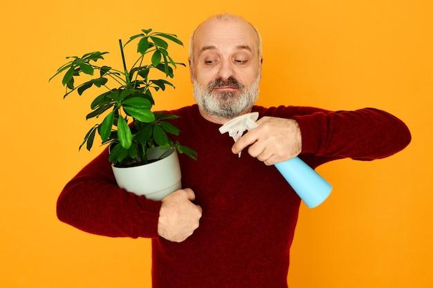 禿げ頭と灰色のあごひげが観葉植物に水を噴霧し、葉に潤いを与えてほこりを取り除く魅力的なエネルギッシュな年配の男性。退職時に観賞植物を育てる年配の男性年金受給者 無料写真