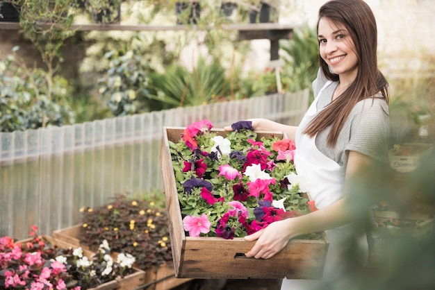 An attractive young woman showing colorful petunias saplings in wooden crate Free Photo